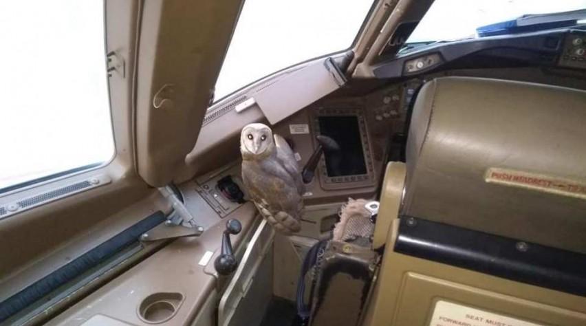 Kerkuil cockpit Boeing 777