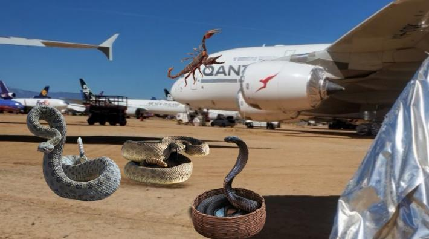 Qantas A380 slang schorpioen