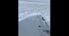 American Eagle sneeuwhappen
