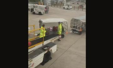 Smijtende bagageafhandelaar