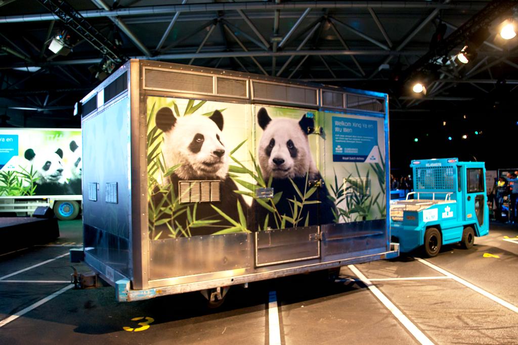 KLM panda